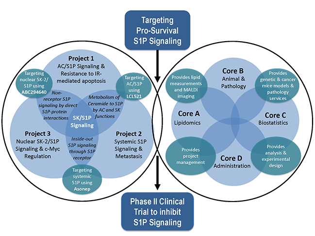 chart showing the sphingolipid program project grant projects and cores and the ways they overlap